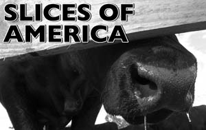 Slices of America Podcast